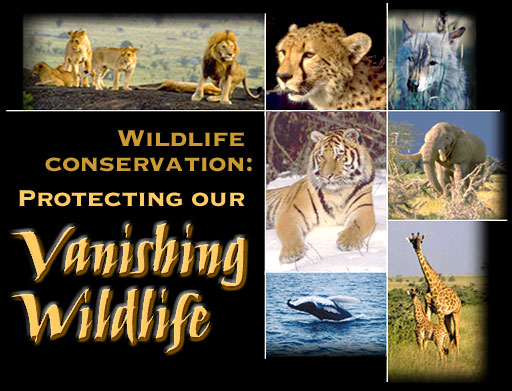 Essay on conservation of wildlife